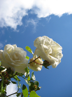 scent_mem_10.jpg