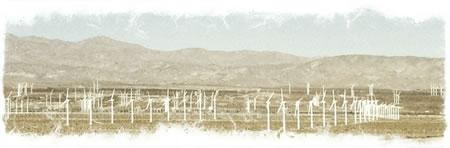 Palm Springs Designed Modernism