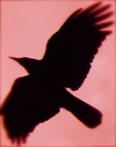 The Raven, a telling