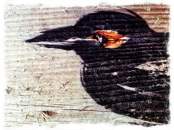 The gesture of black, raven ink -- drawing the spirit of birds