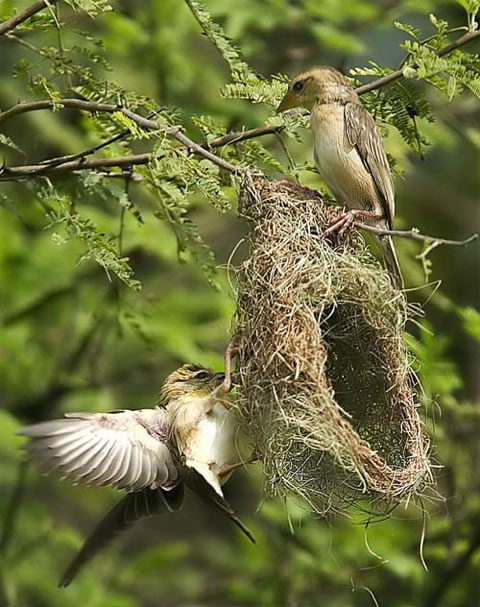 The nest, the egg, the weaving of the Matrix