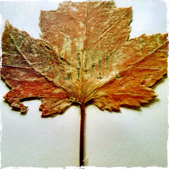 THE LEAVES OF A BOOK, THE TREES OF LEAVES
