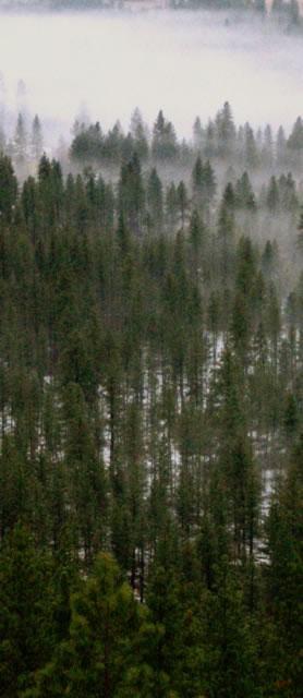 The Perfume of Trees