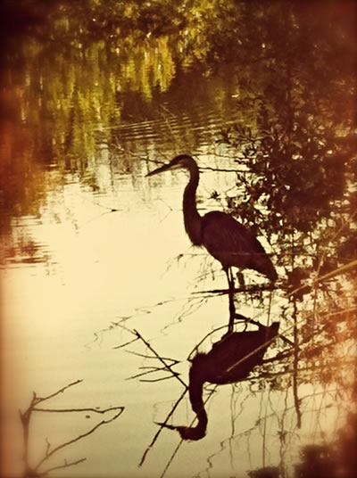 """Slow Attention: Spinning Life in the Everglades — Primeval """"Swamp Time"""""""