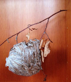 WEAVING IDEAS | THE SYMBOLISM OF THE NEST